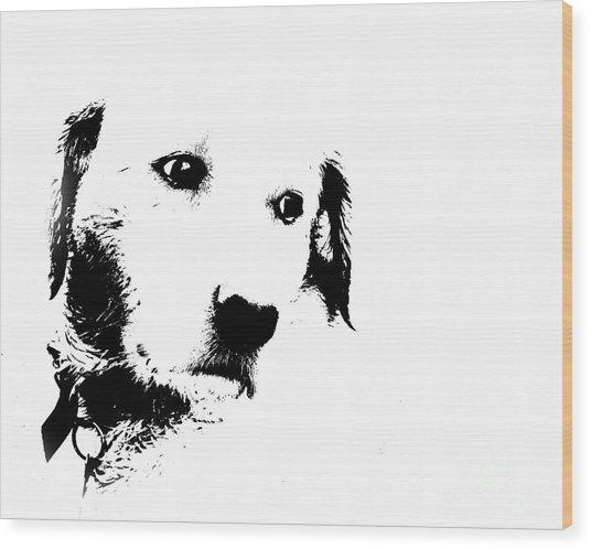Charlie The Poser Labadoor Wood Print by Jo Collins