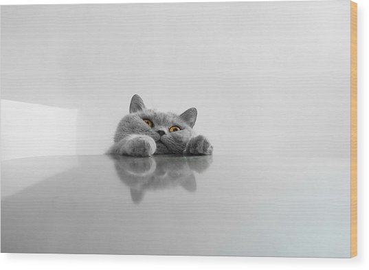 Chartreux Rearing Up On Table Against Wood Print by Dipak Maske / Eyeem