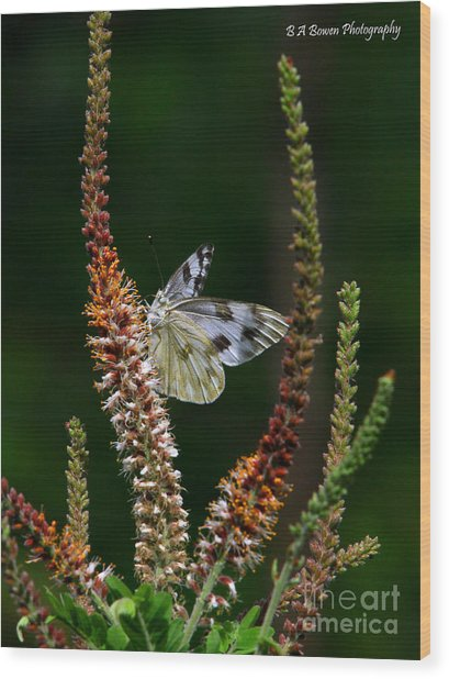 Checkered White On An Indigo Wood Print