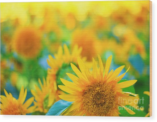 Cheerful And Happy Yellow Sunflower Field In Summer Wood Print