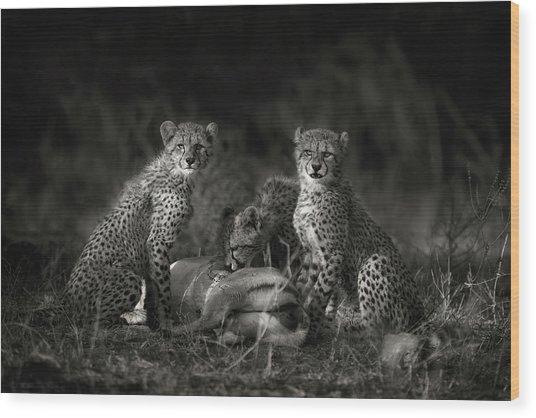 Cheetah Cubs Wood Print by Mario Moreno