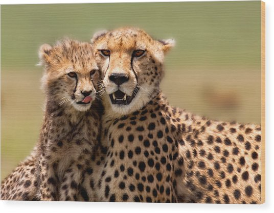 Cheetah Mother And Cub In Masai Mara Wood Print by Maggy Meyer