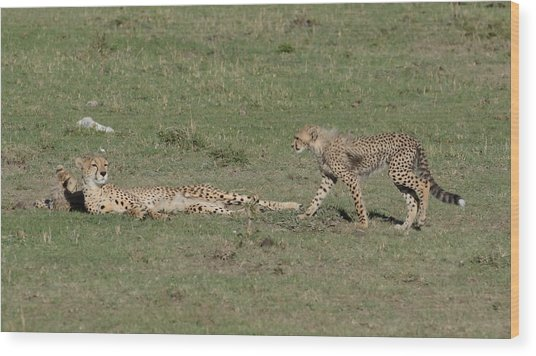 Cheetah Relaxing With Her Cubs Wood Print