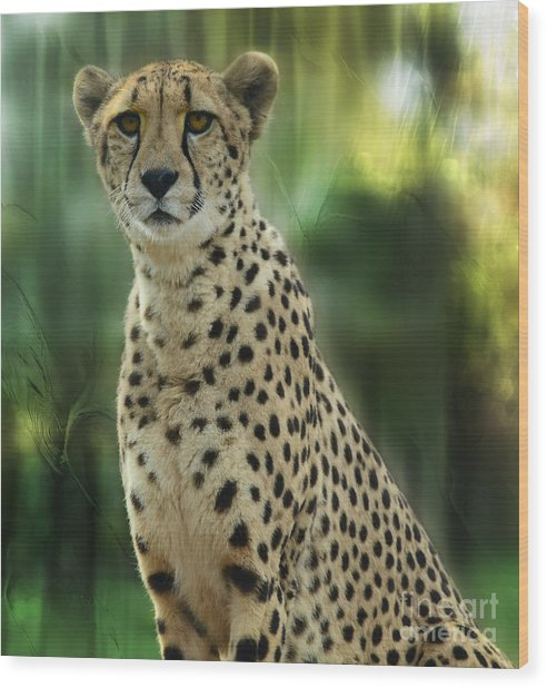 Cheetah Spots Wood Print