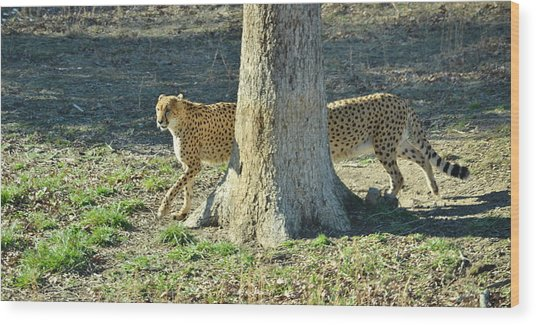 Cheetah Stretch Wood Print