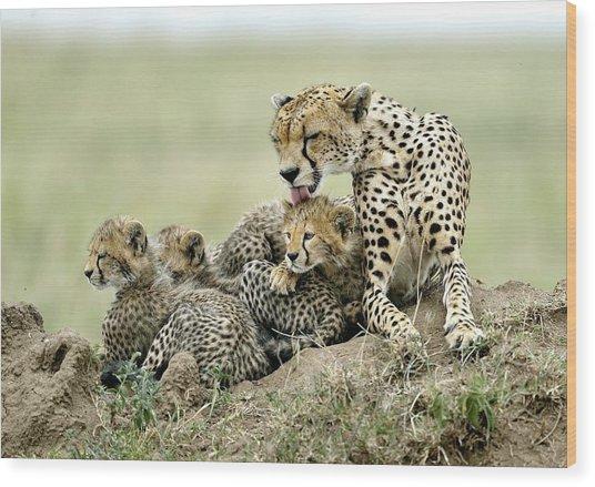 Cheetahs Wood Print by Giuseppe D\\\'amico