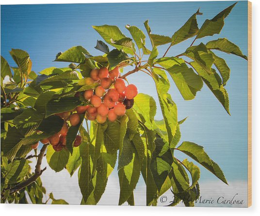 Cherries In The Sun Wood Print by Marie  Cardona