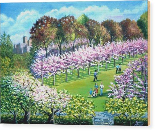 Cherry Blossems At The Brooklyn Botanical Garden Wood Print