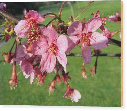 Cherry Blossom 2 Wood Print
