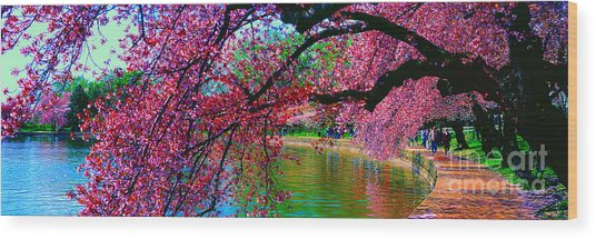 Cherry Blossom Walk Tidal Basin At 17th Street Wood Print