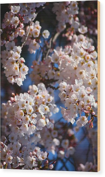 Cherry Blossoms And Blue Sky-2 Wood Print