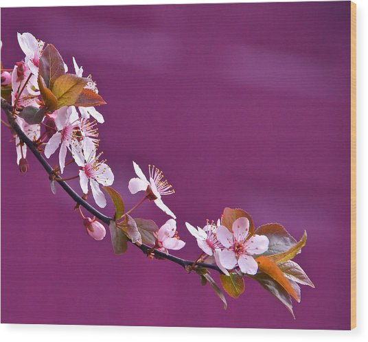 Cherry Blossoms And Plum Door Wood Print