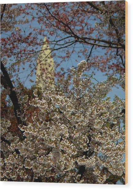 Cherry Blossoms And The Monument Wood Print