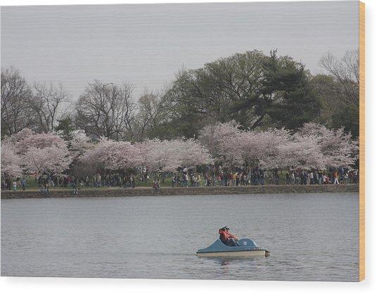 Cherry Blossoms - Washington Dc - 011314 Wood Print by DC Photographer