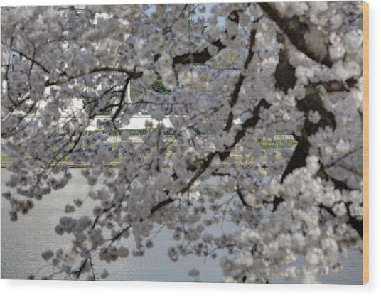 Cherry Blossoms With Jefferson Memorial - Washington Dc - 011338 Wood Print by DC Photographer