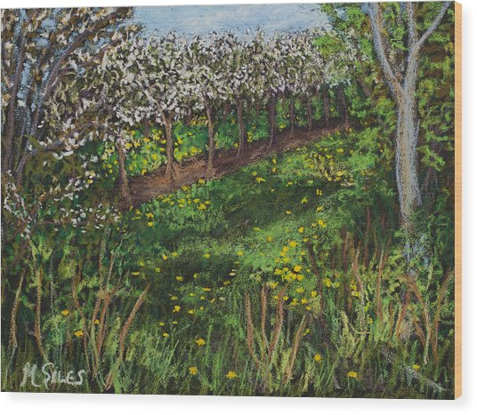 Cherry Orchard Evening Wood Print