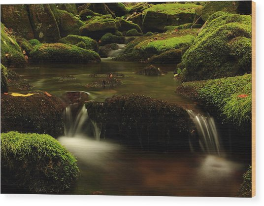Cherry Run Grotto Wood Print by Cody Arnold