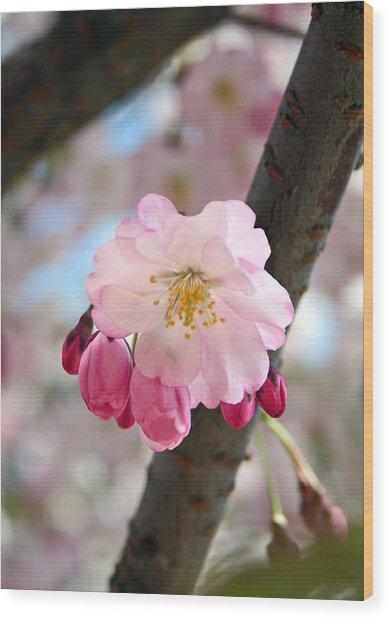 Cherry Tree Blossom Series 801 Wood Print