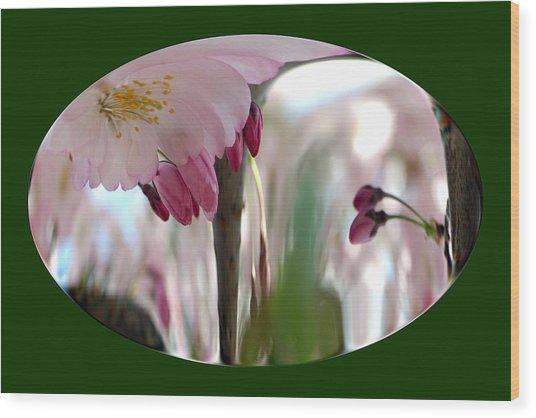 Cherry Tree Blossom Series 803 Wood Print