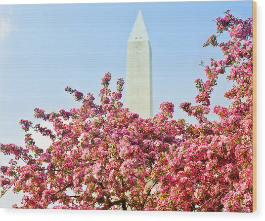 Cherry Trees And Washington Monument Two Wood Print