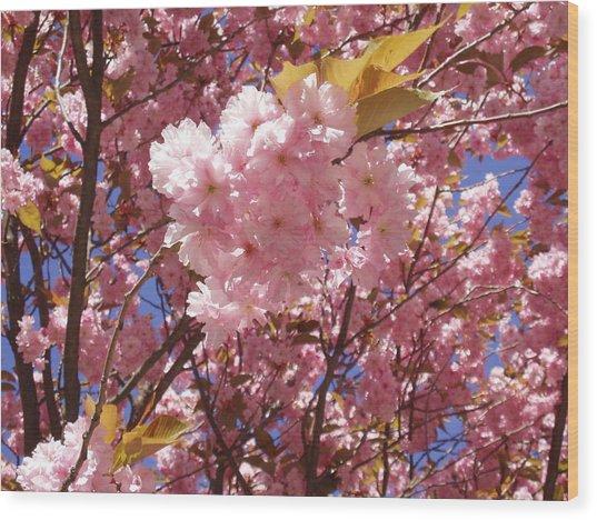 Cherry Trees Blossom Wood Print