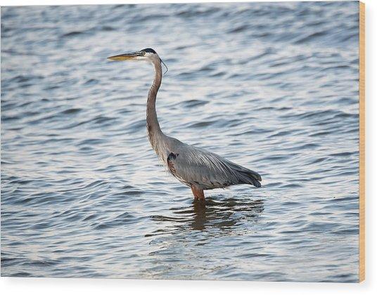 Chesapeake Bay Blue Heron Wood Print