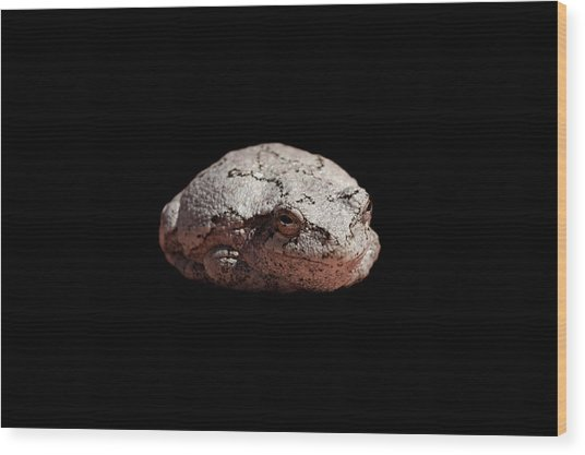 Cheshire Toad Wood Print
