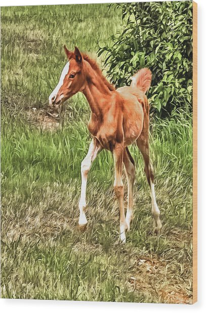 Chestnut Foal Wood Print
