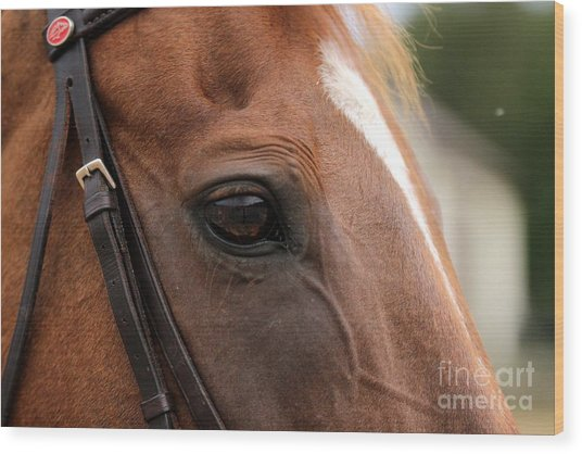 Chestnut Horse Eye Wood Print