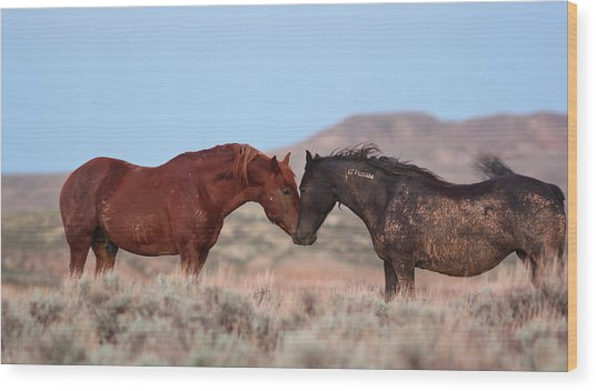 Chestnut Mustang Stallion And Black Mare Wood Print