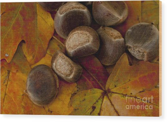 Chestnuts And Fall Leaves Wood Print