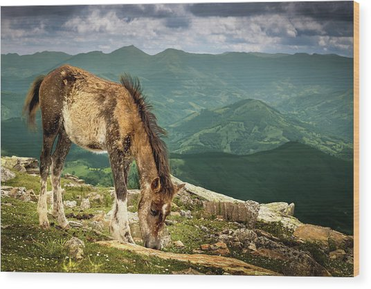 Cheval De La Rhune Le Pottok Wood Print by Oeildeprimate Photographe