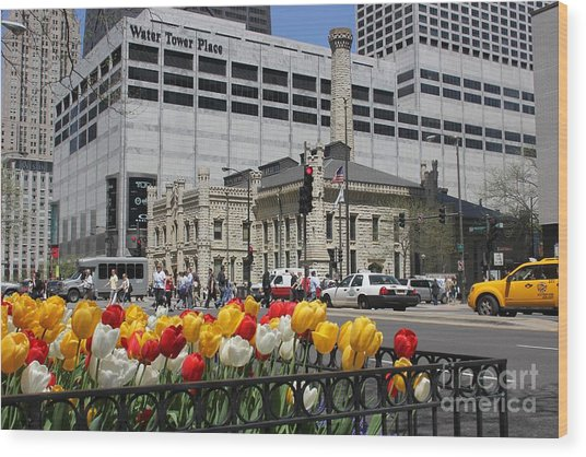 Chicago At Spring Time Wood Print
