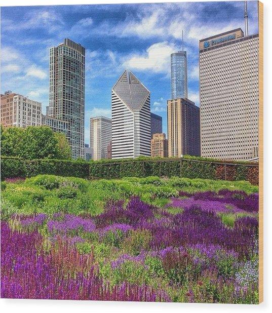 Chicago Skyline At Lurie Garden Wood Print