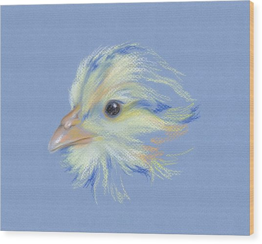 Chick - Plymouth Barred Rock Wood Print
