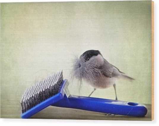 Chickadee At Work Wood Print
