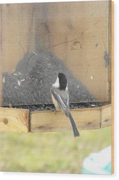 Chickadee Eating Lunch Wood Print