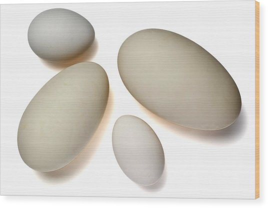 Chicken And Goose Eggs Wood Print