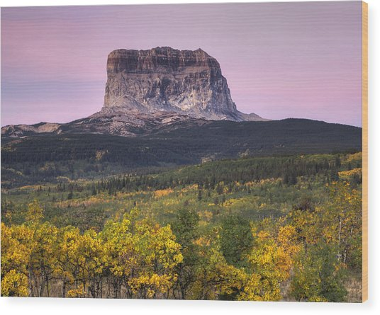 Chief Mountain Sunrise Wood Print