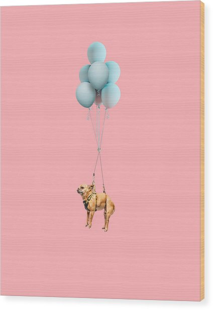 Chihuahua Dog Floating With Balloons Wood Print by Ian Ross Pettigrew