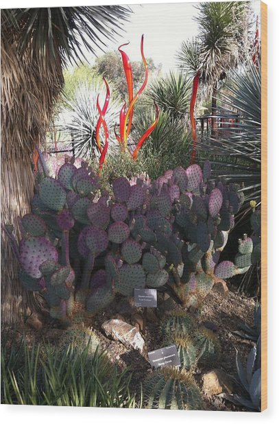 Chihuly Glass In Cactus Wood Print by Jack Edson Adams