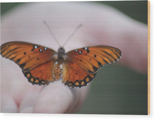 Child And Butterfly - We Shall Renew Again Wood Print by Carolina Liechtenstein