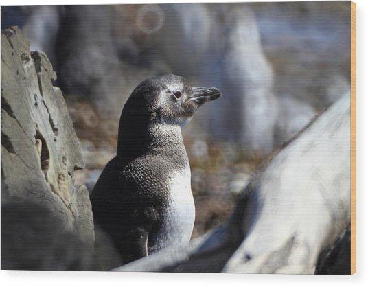 Chilean Penguin Wood Print by Arie Arik Chen