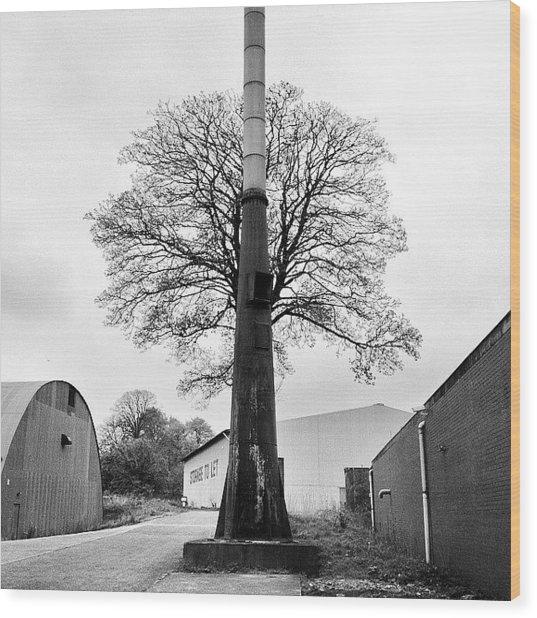 Chimney Tree Wood Print