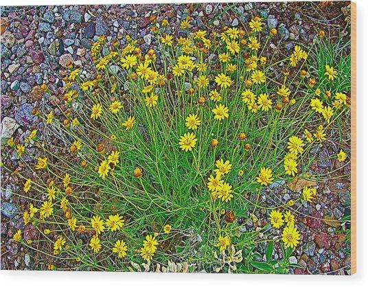 Chinchweed In Big Bend National Park-texas Wood Print