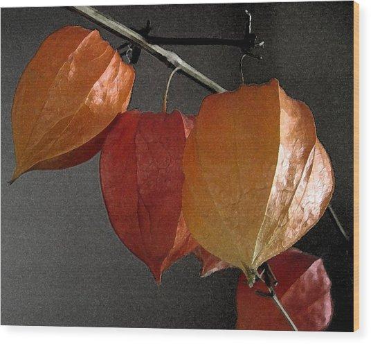 Chinese Lantern Plant At  Midnight Wood Print by Patricia E Sundik