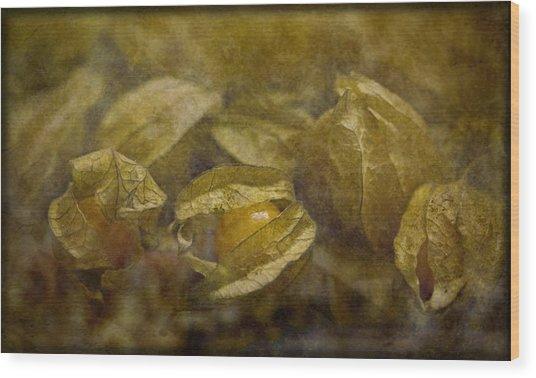 Chinese Lanterns Wood Print by Liz  Alderdice