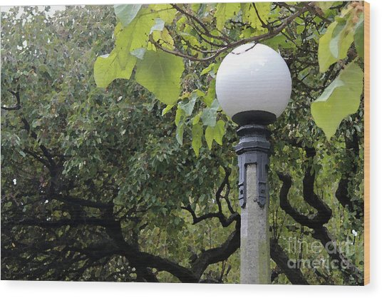 Chittenden Garden Wood Print by Stephen Prestek