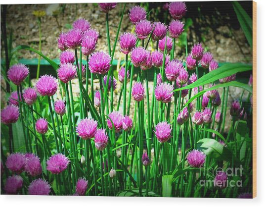 Chives Wood Print by Christy Beal