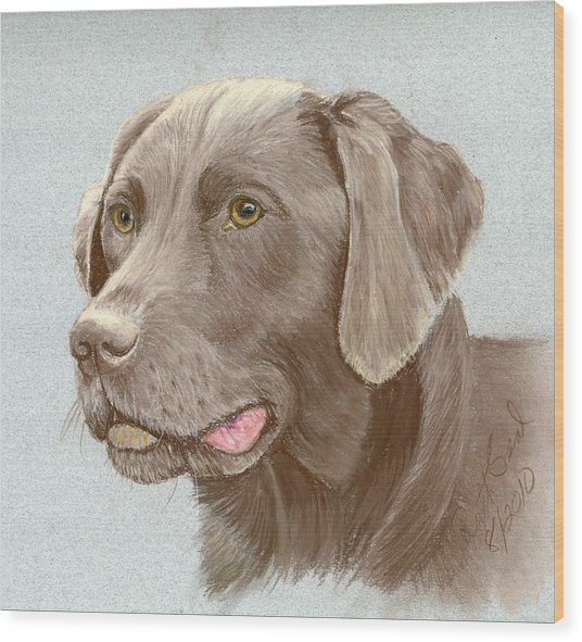 Chocolate Labrador Retriever Wood Print